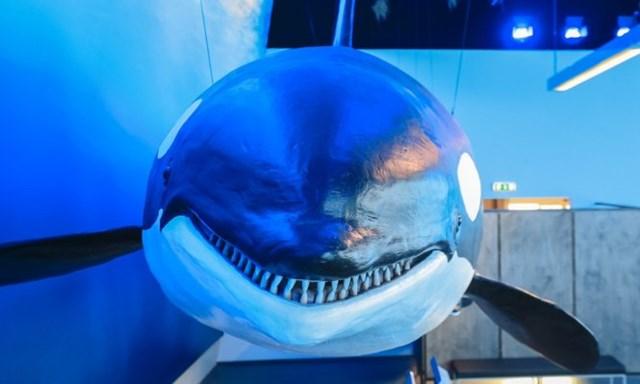 Triển lãm mô hình cá voi nhằm nâng cao nhận thức con người cần bảo tồn chúng. Ảnh: Roman Gerasymenko.