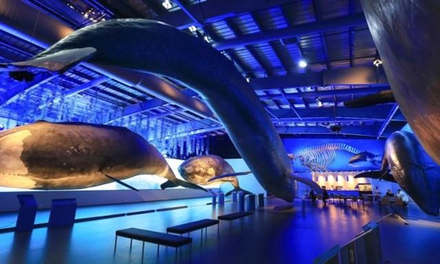 Những khung bộ xương cá voi cũng được trưng bày. Ảnh: Roman Gerasymenko.
