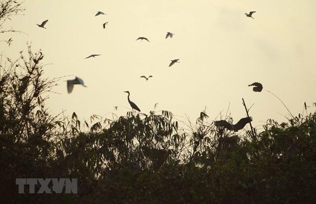 Những cánh cò trắng chao liệng giữa lòng thành phố. (Ảnh: Phạm Kiên/TTXVN).