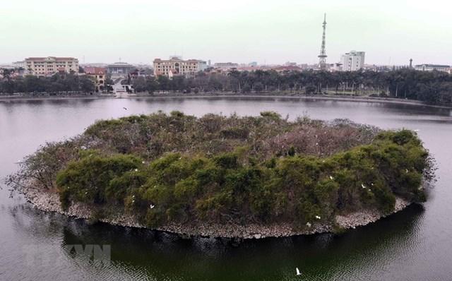 Đảo cò ở thành phố Hưng Yên. (Ảnh: Phạm Kiên/TTXVN).