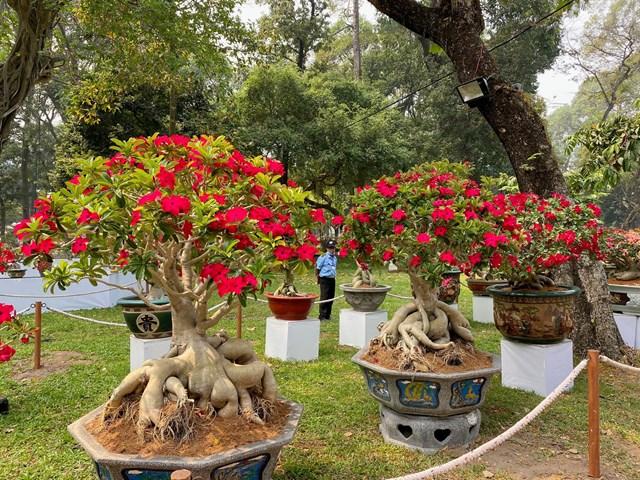 Những cây sứ