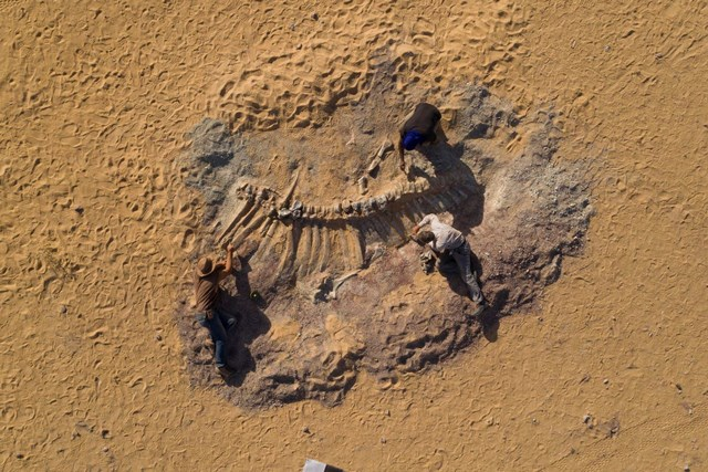 Di chỉ của ít nhất 13 loài khủng long cổ dài có niên đại khoảng 200 triệu năm được phát hiện tại miền Trung Namsa mạcSahara, thuộc địa phận nước Niger ở Tây Phi. Đây là một trong nhữngkho tànghóa thạch lớn nhất châu Phi. Tuy nhiên, việc khai quật hiện bị đình trệ vì Niger đang trải qua làn sóng dịch bệnh Covid-19 thứ hai. Bên cạnh đó, sự trỗi dậy của các tổ chức Hồi giáo vũ trang đang đặt Niger vào tình trạng bất ổn về mặt chính trị - xã hội.