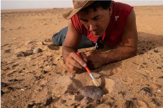 Paul Sereno, thành viên chính của nhóm khảo cổ, tiến hành quét bỏ lớp cát phủ trên mảnh hộp sọ của một di chỉ khoảng 8.000 năm tuổi.