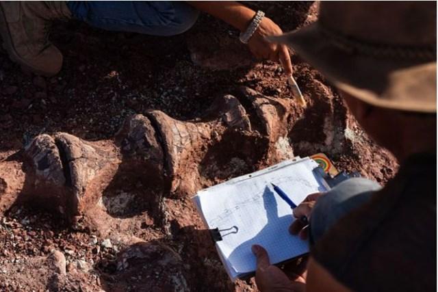 Quần thể hóa thạch này lần đầu được phát hiện vào đầu thập niên 1960, thông qua chương trình khảo sát năng lượng nguyên tử của chính phủ Pháp ở vùng hoang dã Ténéré. Từ đó đến nay, nhiều di chỉ hóa thạch trong quần thể này đã bị đánh cắp và bán lại cho các nhà sưu tập ở Mỹ, Pháp và Italy.