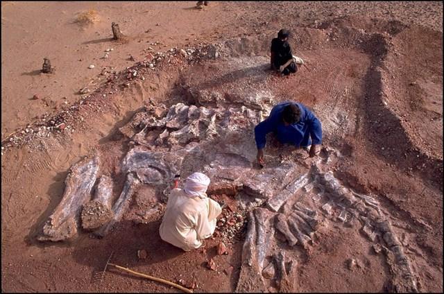 Chính phủ Niger đã đánh dấu kho tàng di chỉ hóa thạch ở sa mạc Sahara và gọi đây là dự án NigerHeritage. Lực lượng bảo vệ cũng đã được điều động song hiện nạn trộm cắp di chỉ hóa thạch vẫn chưa được khống chế hoàn toàn.