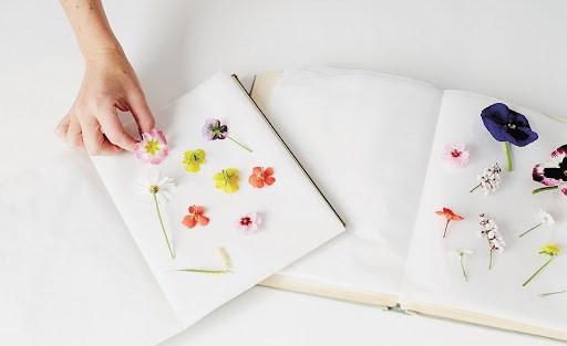 Hoa cánh mỏng, thân không mọng nước dễ ép thành hoa khô.