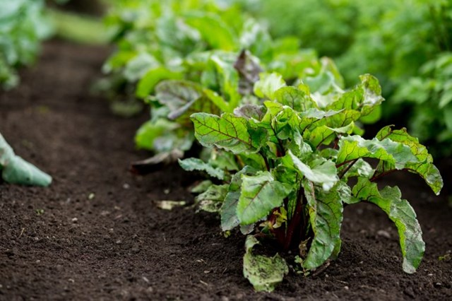 [ẢNH] Cảnh giác những loại thực phẩm dễ gây ngộ độc trong ngày nắng nóng - Ảnh 3