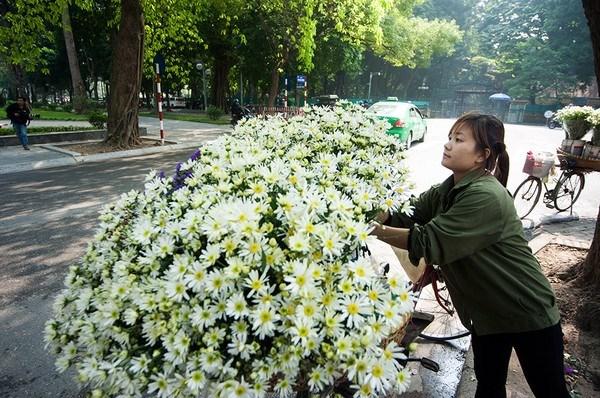 Cúc hoạ mi khoe sắc trong cái nắng hanh hao của mùa đông Hà Nội. Ảnh minh hoạ. Nguồn: Internet.