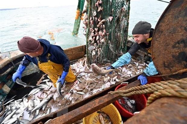 Quyền đánh bắt cá là một trong những bất đồng chính cản trở một thỏa thuận mà hai bên đang rất cần đạt được.. (Ảnh: AFP/TTXVN).