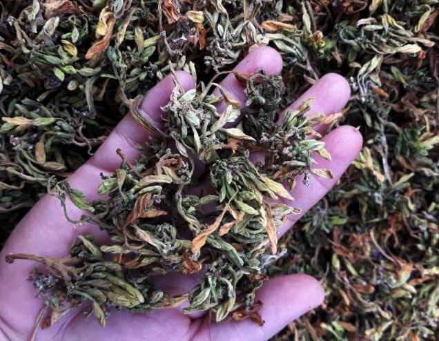 Hoa sau khi sấy khô có giá từ 400.000 - 800.000 đồng/kg.