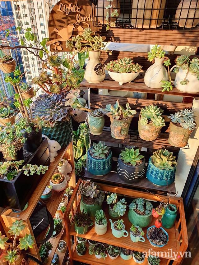 [ẢNH] Ngỡ ngàng vườn sen đá tuyệt đẹp chỉ 6 m2 ở Thủ đô Hà Nội - Ảnh 4