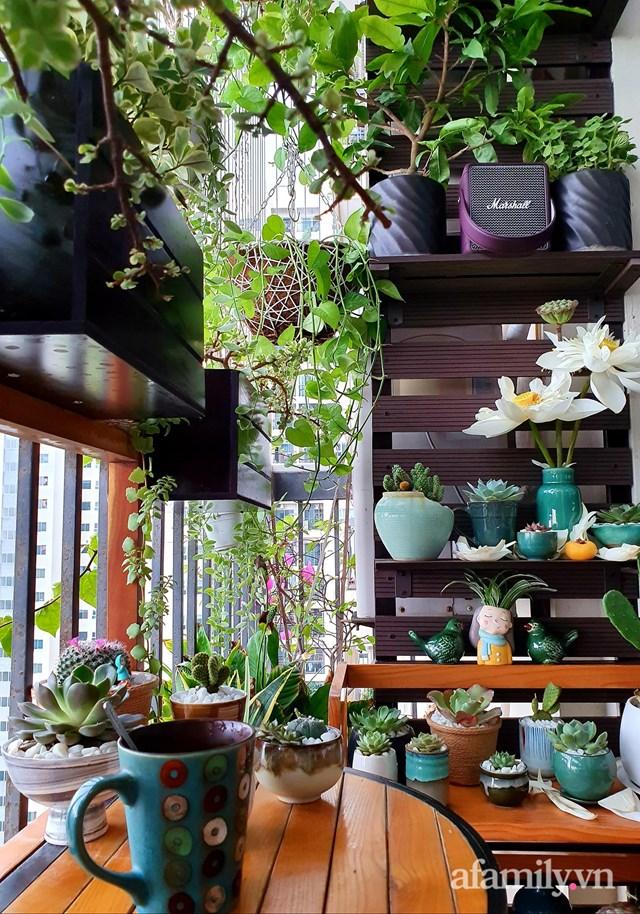 [ẢNH] Ngỡ ngàng vườn sen đá tuyệt đẹp chỉ 6 m2 ở Thủ đô Hà Nội - Ảnh 8
