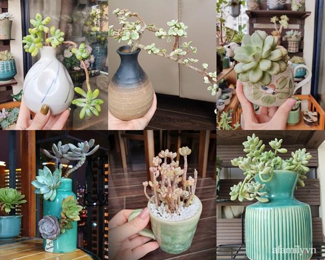 [ẢNH] Ngỡ ngàng vườn sen đá tuyệt đẹp chỉ 6 m2 ở Thủ đô Hà Nội - Ảnh 10