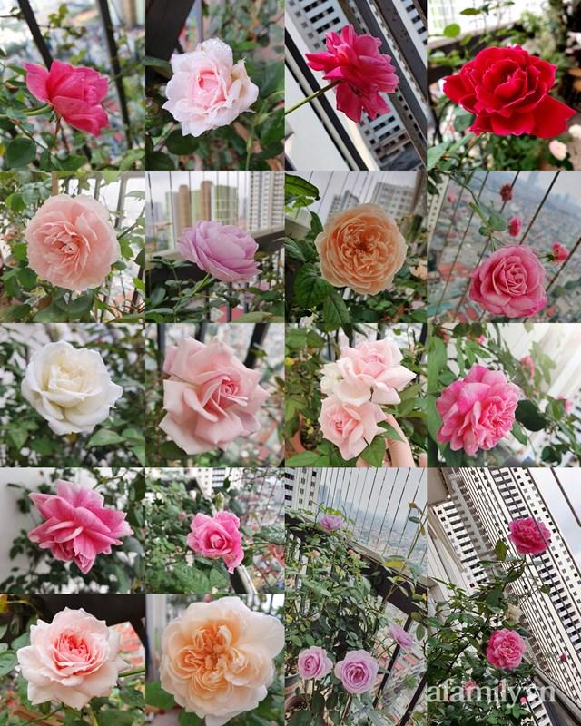 [ẢNH] Ngỡ ngàng vườn sen đá tuyệt đẹp chỉ 6 m2 ở Thủ đô Hà Nội - Ảnh 12