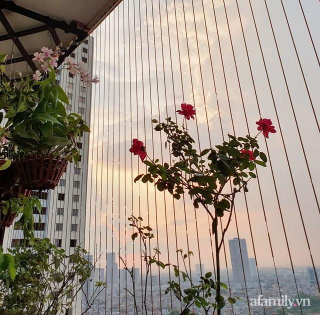 [ẢNH] Ngỡ ngàng vườn sen đá tuyệt đẹp chỉ 6 m2 ở Thủ đô Hà Nội - Ảnh 13