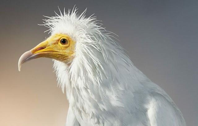 [ẢNH] TOP 25 loài chim quý hiếm và tuyệt đẹp - Ảnh 14