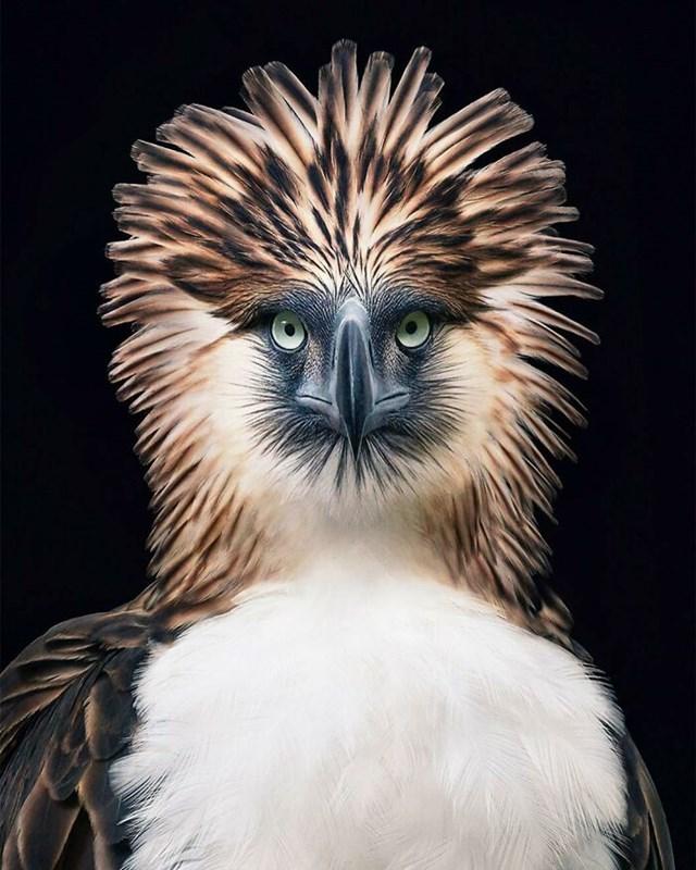 [ẢNH] TOP 25 loài chim quý hiếm và tuyệt đẹp - Ảnh 8