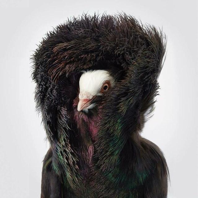 [ẢNH] TOP 25 loài chim quý hiếm và tuyệt đẹp - Ảnh 11