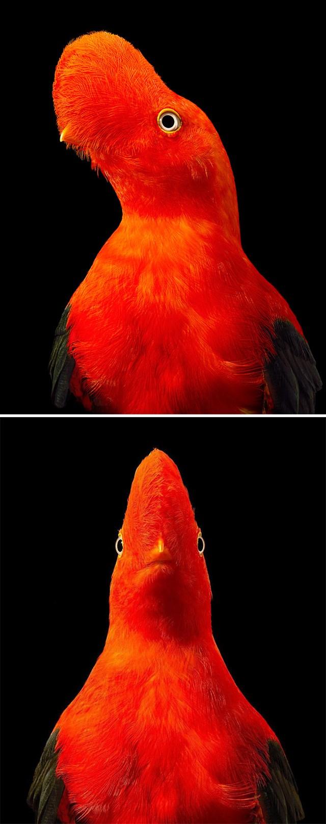 [ẢNH] TOP 25 loài chim quý hiếm và tuyệt đẹp - Ảnh 16