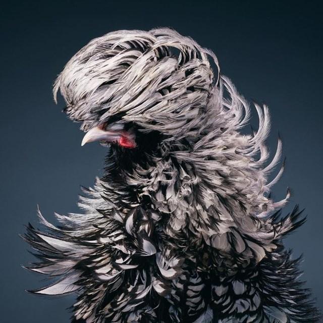 [ẢNH] TOP 25 loài chim quý hiếm và tuyệt đẹp - Ảnh 24