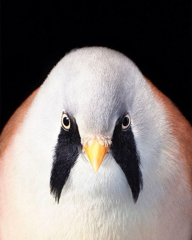 [ẢNH] TOP 25 loài chim quý hiếm và tuyệt đẹp - Ảnh 23