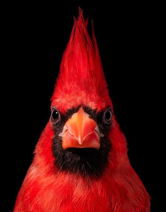 [ẢNH] TOP 25 loài chim quý hiếm và tuyệt đẹp - Ảnh 6