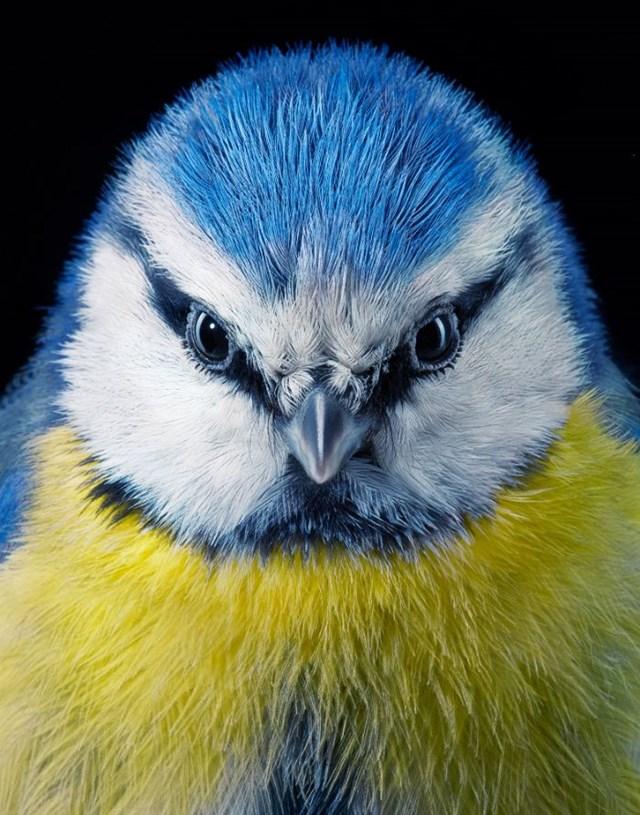 [ẢNH] TOP 25 loài chim quý hiếm và tuyệt đẹp - Ảnh 2