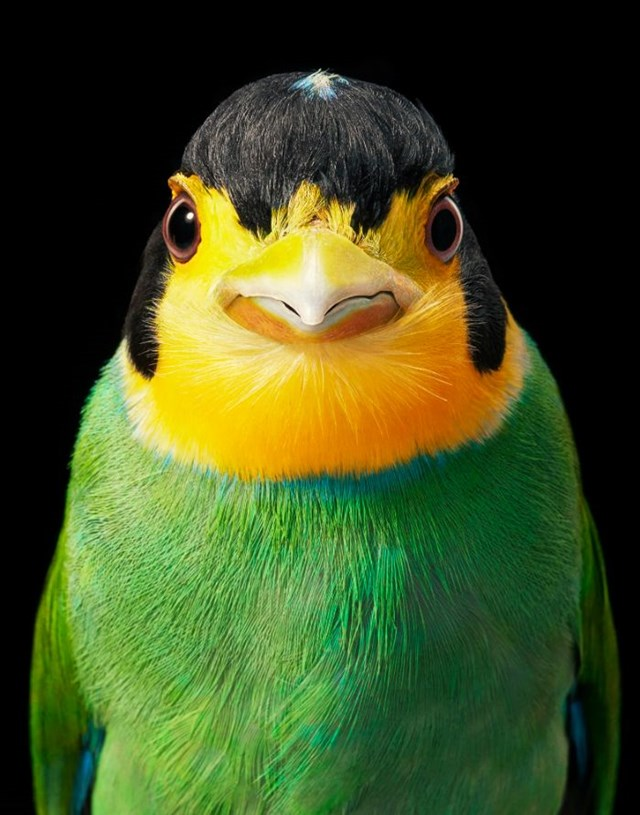 [ẢNH] TOP 25 loài chim quý hiếm và tuyệt đẹp - Ảnh 10