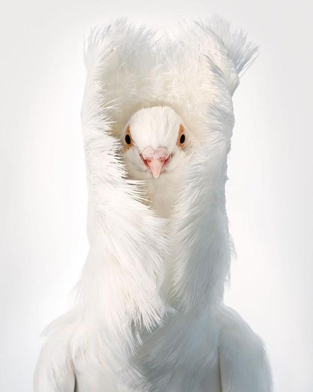[ẢNH] TOP 25 loài chim quý hiếm và tuyệt đẹp - Ảnh 9