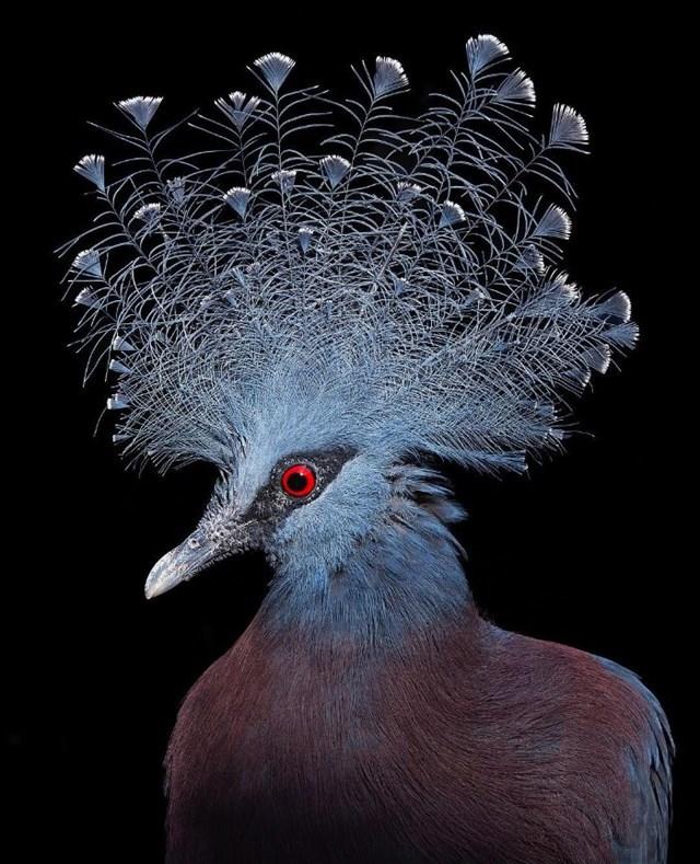 [ẢNH] TOP 25 loài chim quý hiếm và tuyệt đẹp - Ảnh 12