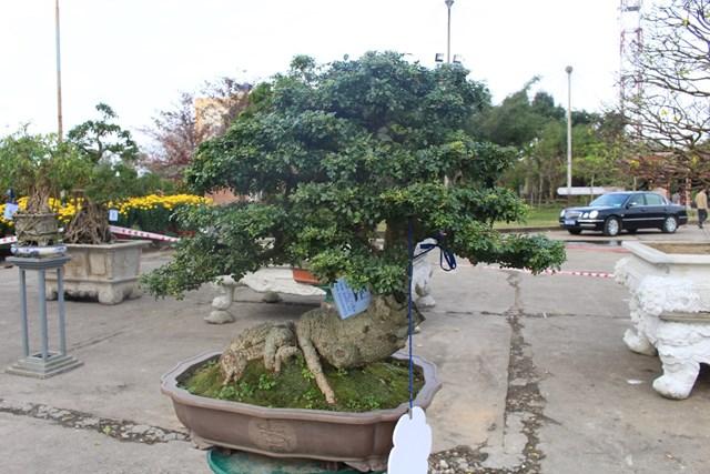 [ẢNH] Ngắm bonsai độc-lạ-đẹp bày bán dịp Tết - 9