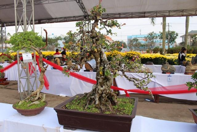 [ẢNH] Ngắm bonsai độc-lạ-đẹp bày bán dịp Tết - 10