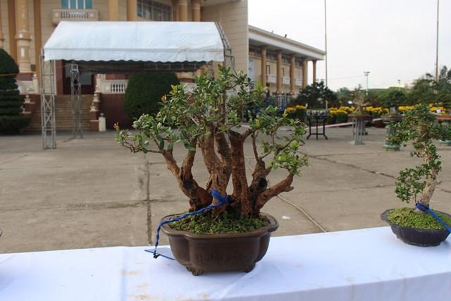 [ẢNH] Ngắm bonsai độc-lạ-đẹp bày bán dịp Tết - 5