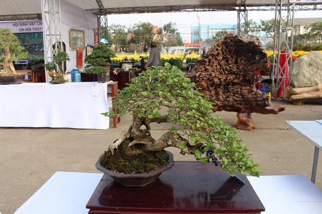 [ẢNH] Ngắm bonsai độc-lạ-đẹp bày bán dịp Tết - 4