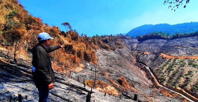 Quảng Nam: Khẩn trương hoàn chỉnh hồ sơ khởi tố vụ cháy rừng phòng hộ