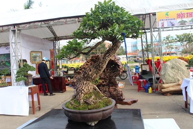 [ẢNH] Ngắm bonsai độc-lạ-đẹp bày bán dịp Tết - 8