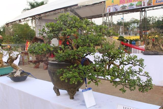 [ẢNH] Ngắm bonsai độc-lạ-đẹp bày bán dịp Tết - 6