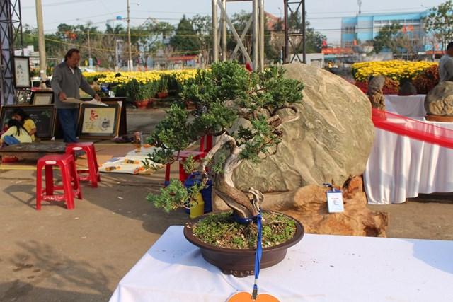 [ẢNH] Ngắm bonsai độc-lạ-đẹp bày bán dịp Tết - 3