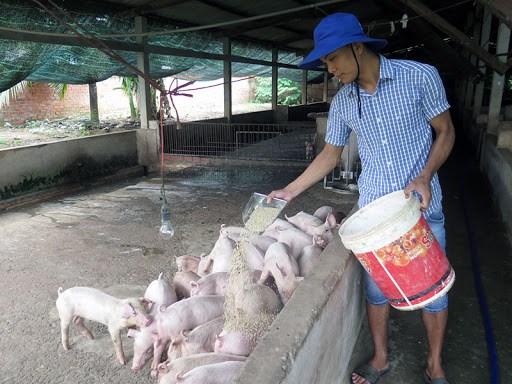 Áp lực giảm giá thịt lợn