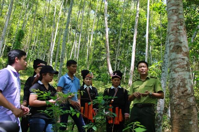 Khai thác thế mạnh của rừng đặc dụng, phòng hộ có tiềm năng