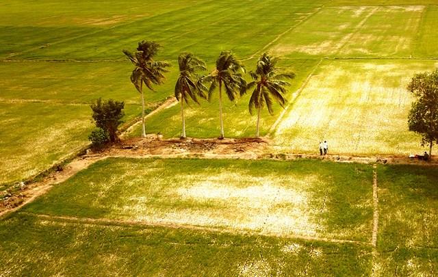 Đồng bằng sông Cửu Long: Kênh rạch cạn kiệt, ruộng đồng héo khô
