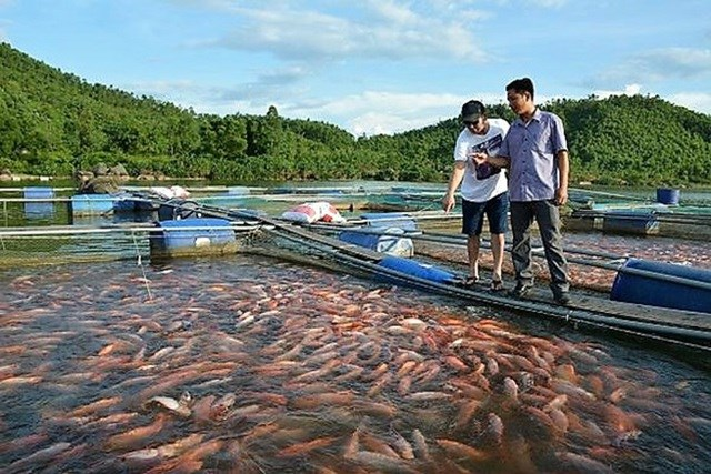 Sống khỏe từ nuôi cá lồng