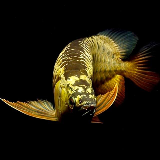 Vẻ đẹp của cá cảnh - 4