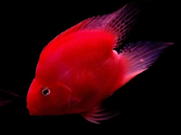 Vẻ đẹp của cá cảnh - 5
