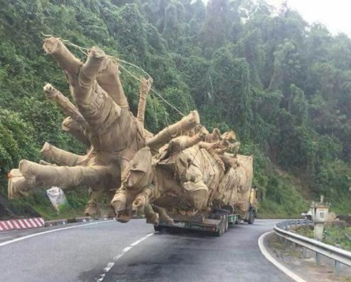 """Vụ xe chở cây """"quái thú"""": Truy rõ trách nhiệm tổ chức, cá nhân liên quan"""