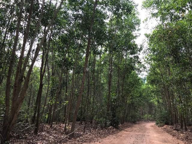 Bình Định: Nguy cơ cháy lớn tại các khu vực rừng trồng