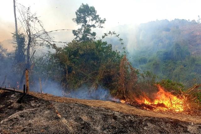 Quảng Nam: Gần 200 người tham gia chữa cháy rừng phòng hộ - 1