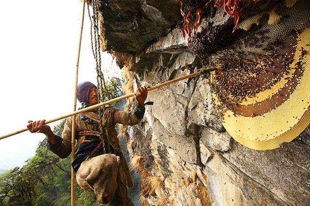 Lấy mật ong ở Nepal - 2