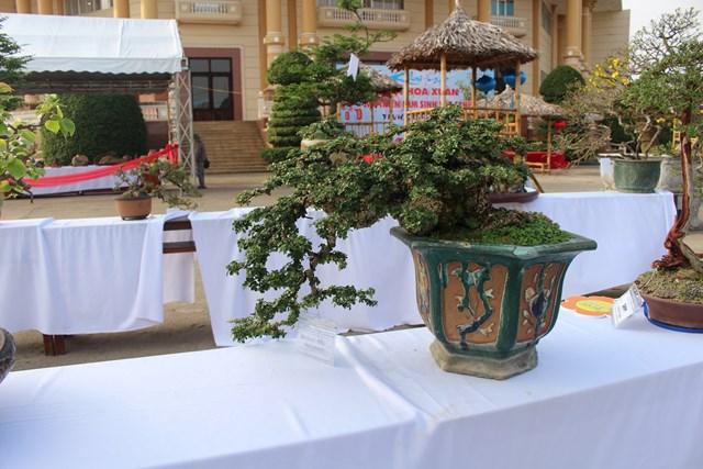 [ẢNH] Ngắm bonsai độc-lạ-đẹp bày bán dịp Tết - 2