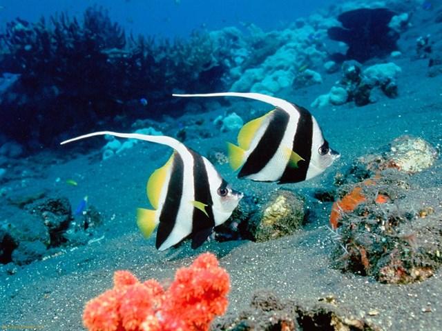 Vẻ đẹp của cá cảnh - 1